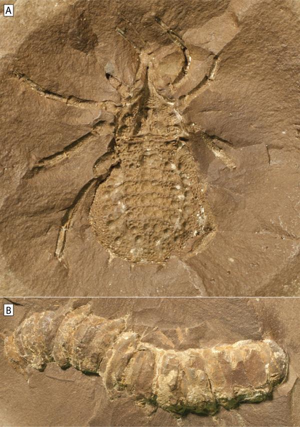 Vysvětlit důležitost radiometrického randění s paleontology